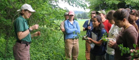 Volunteers learning how to identify invasive plants
