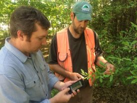 Volunteers mapping invasive plants