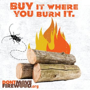 Dont move firewood