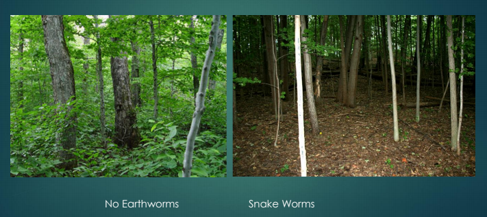 Earthworm forest photos