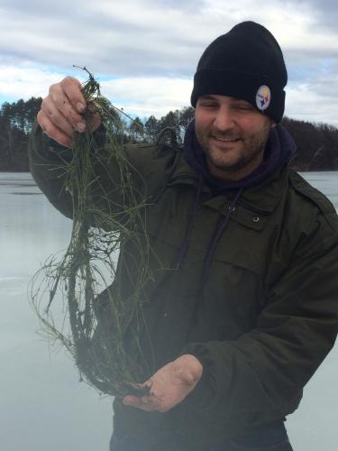 Researcher holding a clump of starry stonewort attained through the ice on a Vermont lake