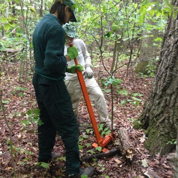 "Management can have as much of an impact as the invasive plants. Removing invasive plants at Button Bay State Park in the ""natural area"" involves thoughtful control work, to protect rare, threatened, or endangered native plant species."